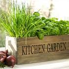 L'orto in cucina: consigli e idee originali per creare un piccolo kitchen garden.